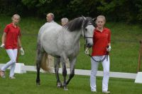 glaskopf-grey-celia-2014-08-02_lbb